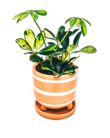 9 X decorated pot with legs - REF 010