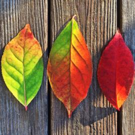 Échte bladeren aan je bedels