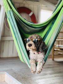 Met jouw hond op vakantie