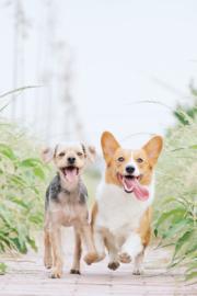 Vaccinatie bij de hond