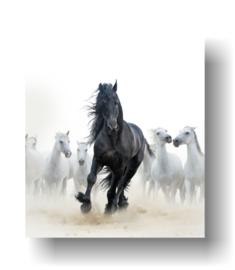 Wild paard op 3mm plaat in diverse afm