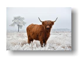 Schotse Hooglander op 3mm plaat in diverse afm