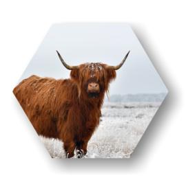 Schotse Hooglander -Hexagon op 3mm plaat diverse afm