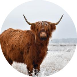 Schotse Hooglander behangcirkel