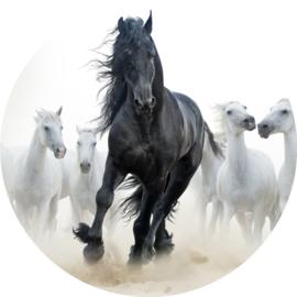 Paard Fotobehang