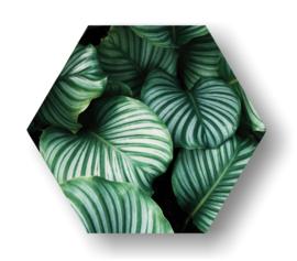Leaf -Hexagon op 3mm plaat diverse afm