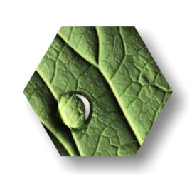 Blad met waterdruppel -Hexagon op 3mm plaat diverse afm