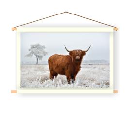 Schotse Hooglander op doek