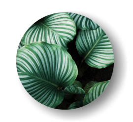 Leaf -rond op 3mm  plaat diverse afm