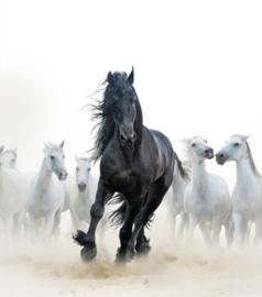 Print Wild paard