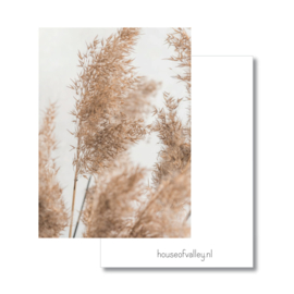 A4 poster | Pampas wit