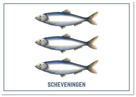 Het wapen van Scheveningen | A4 Poster  | Per 3 stuks