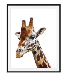 Poster van giraffe in kleur