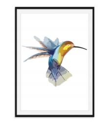 Kolibrie - Poster