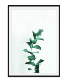 Eucalyptus - Poster
