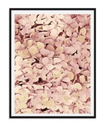 Hortensia bloemen - Poster