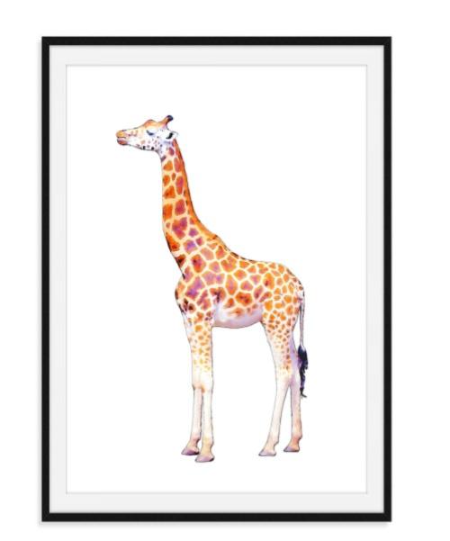 Giraf Poster