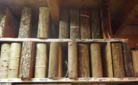 Boomboeken  Xylotheek
