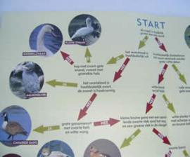 Watervogels (De Kaaihoeve)  A3 formaat