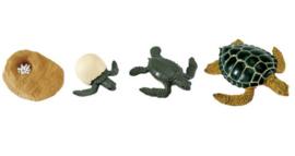 Schildpad  levenscyclus