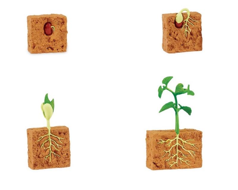 Levenscyclus plant