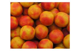 Classic Range Tutti Frutti