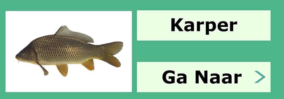 Karper vissen