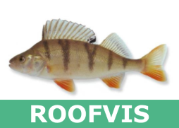 Roofvis