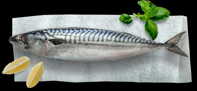 Makreel Fish@Home Thuisbezorgd