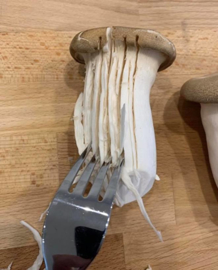 Pasta van paddenstoelen!