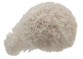 Pom Pom Blanc 500 gram