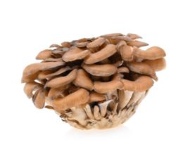 Verse paddenstoelen