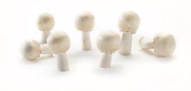 Anijs paddenstoel