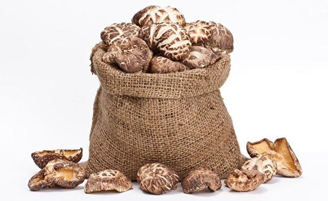 Shiitake paddenstoel