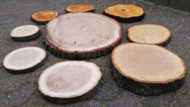 Boomschijven van eikenhout