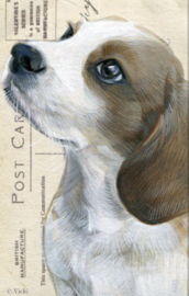 Wenskaart Beagle