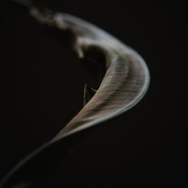 'The Curve' - Atelier K.