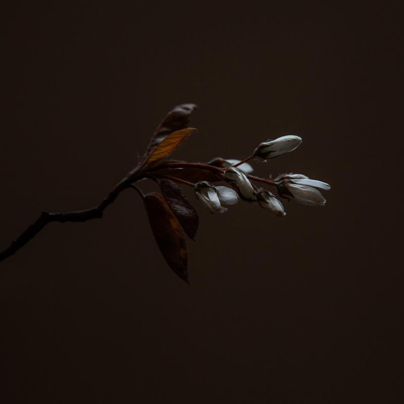 'Muted Spring'- Dibond Art inclusief baklijst