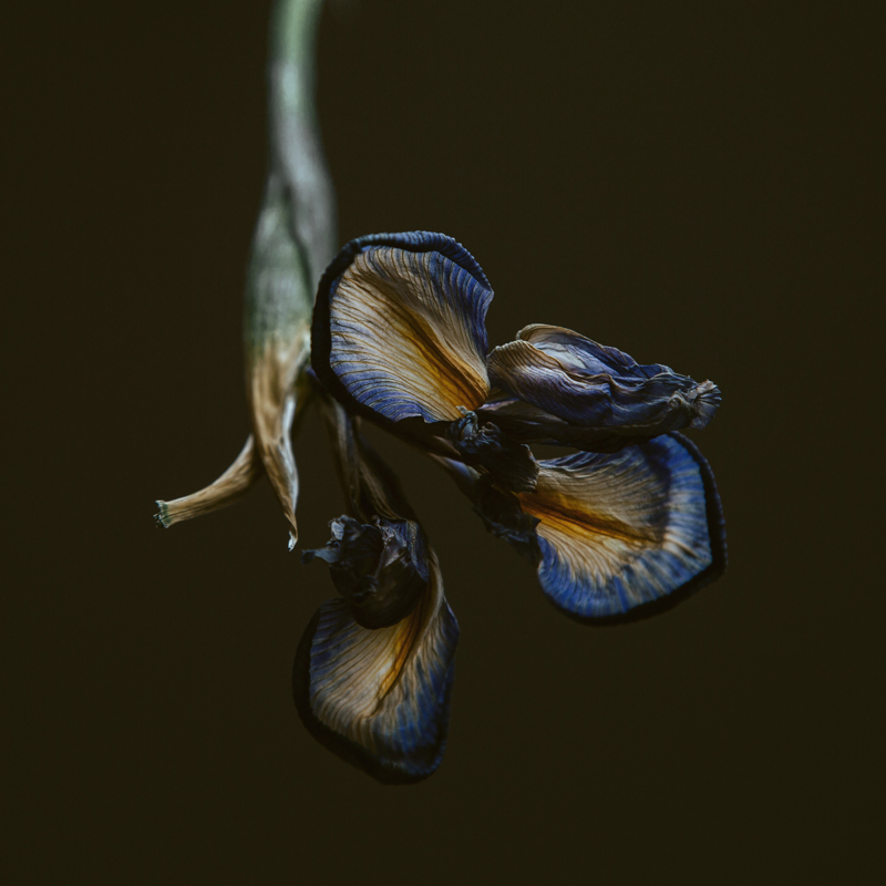 'Iris' - Atelier K.