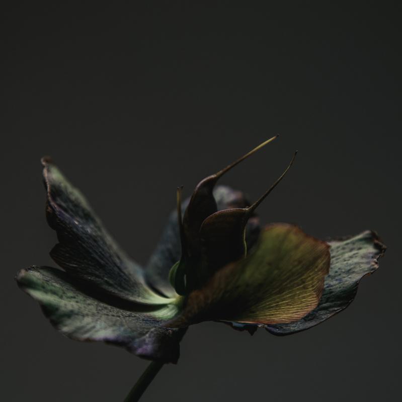 'Perspective'- Atelier K.