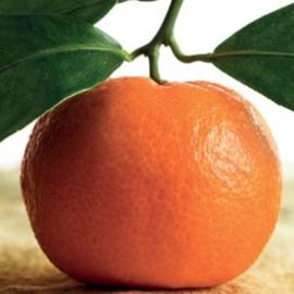 Mandarine extra Olie, Italy, trad. 10 ml   LakShmi