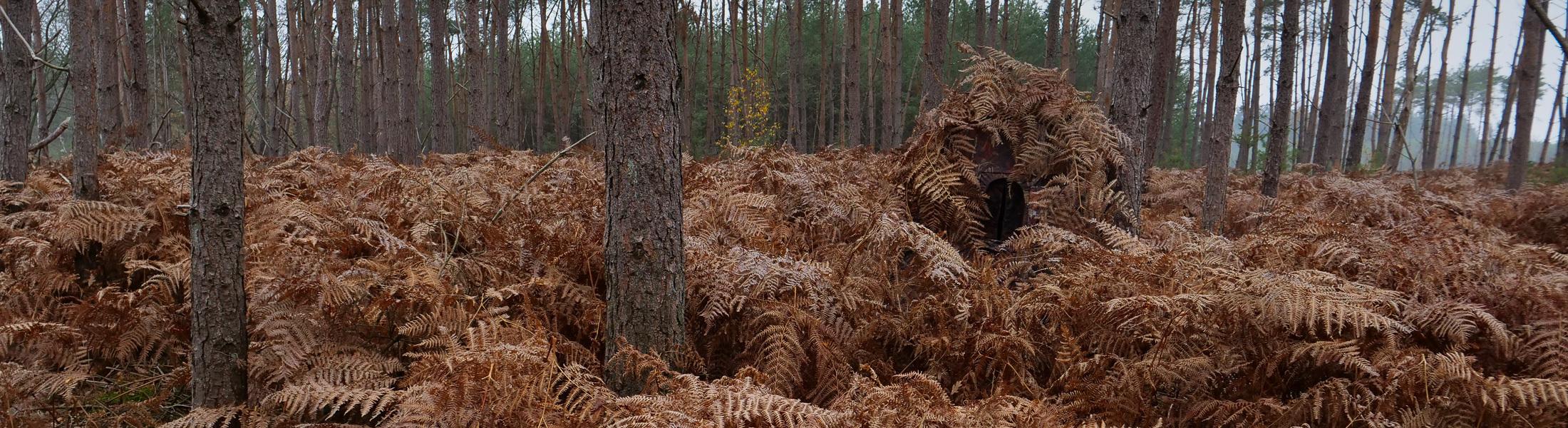 Herfst Schuiltent in bos