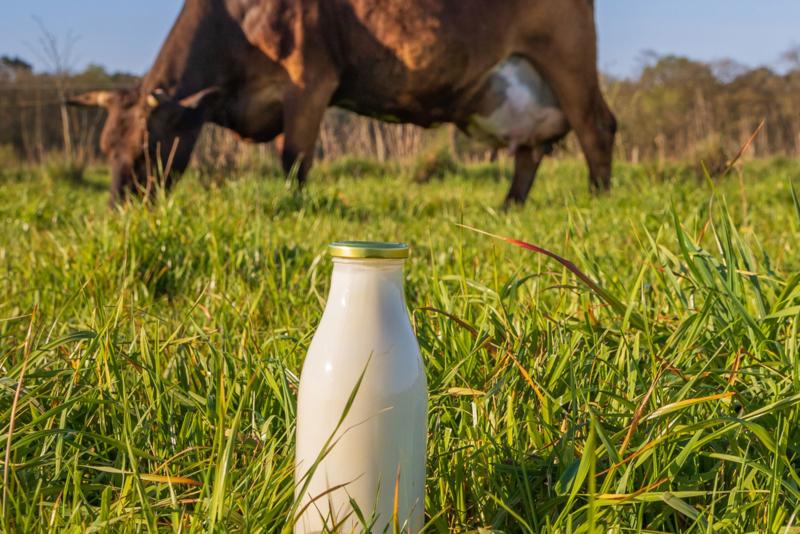 Boerenyoghurt Biologisch | 1/2 liter
