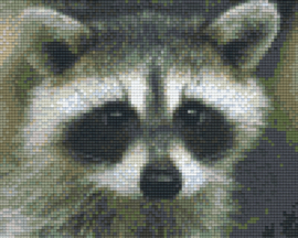 Pixelhobby set - racoon - 4 basisplaten