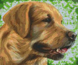 Pixelhobby set - Labrador - 6 basisplaten