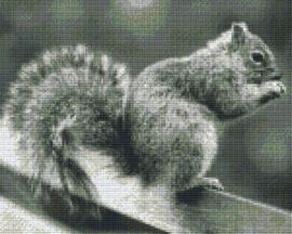 Pixelhobby set - eekhoorn - 9 basisplaten