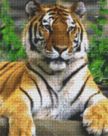 Pixelhobby set - tiger - 9 basisplaten