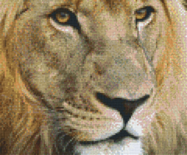 Pixelhobby set - leeuw - 6 basisplaten