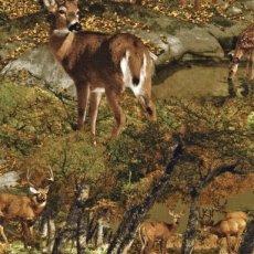Katoen - Deer in woods