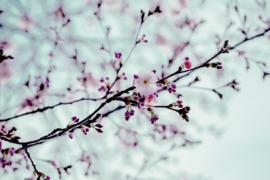 Blossom blue - dubbel met envelop